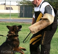Raven likes training and playing with Dog bite sleeve cover ( Dog bite sleeve cuff ) with handle - PSC1handlejute